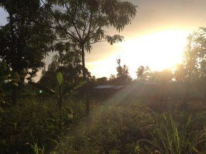 44 Kimanbo's Farm